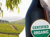 What Organic Wine?