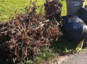 Everything Need Know About Composting Leaves