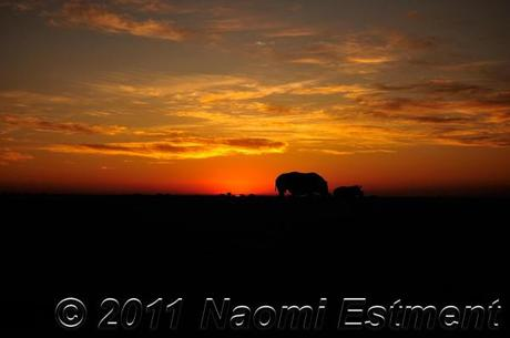 African sunset with rhino's