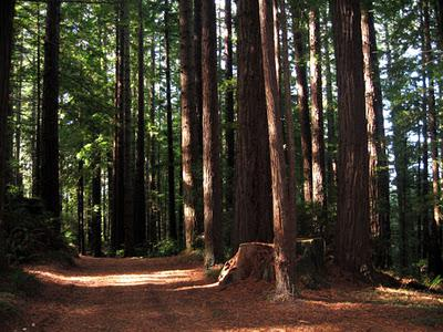 Humboldt County:  Redwoods, Seashore, and California History