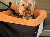 Booster Seat: Safety Never Looked Cute