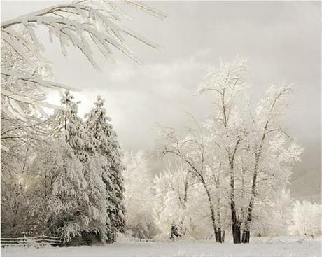 Winter Songs and a Selection from Schubert