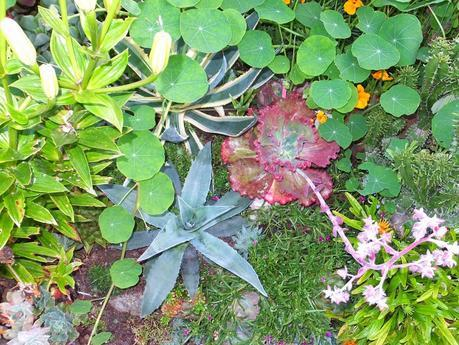 Exotic Plants and Exotic Fish