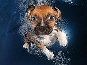 Unleashed: Seth Casteel's Underwater Puppies