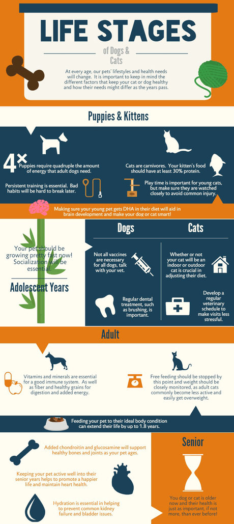 Life Stages of Dogs and Cats (Infographic) ~ Plus, 50% Off Pet Food from Petbrosia!