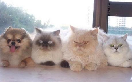 Top 10 Images of Three Cats Together