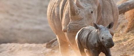 Talking to Kids About Rhinos