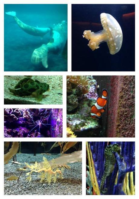 chicago acquarium