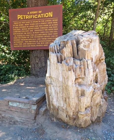 PETRIFIED FOREST: Three Million Year Old Redwoods Turned to Stone, Calistoga, California