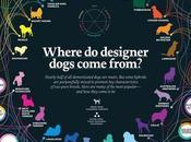 Infographic: Origins Designer Dogs