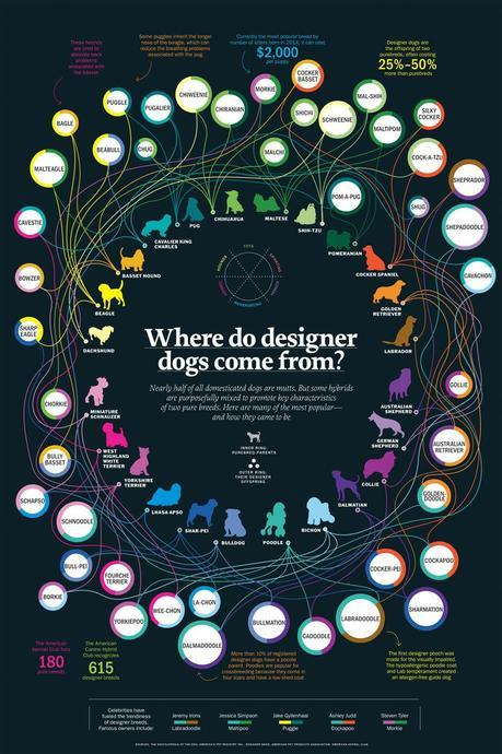 infographic on origins of designer dogs