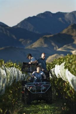 Kiwis & Cowhorns: A Talk about Terroir with NZ Wine Maker Sam Weaver – Churton Wines