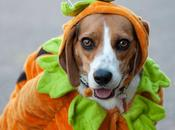 Best Halloween Costume Ideas Dogs