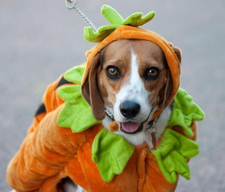 best halloween costume ideas for dogs