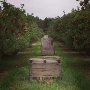 appleorchard1