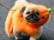 CUTEST Halloween COSTUMES DOGS 2014!