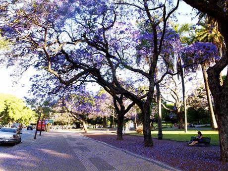 50 1024x768 Spring in Buenos Aires: Best time to visit the city!
