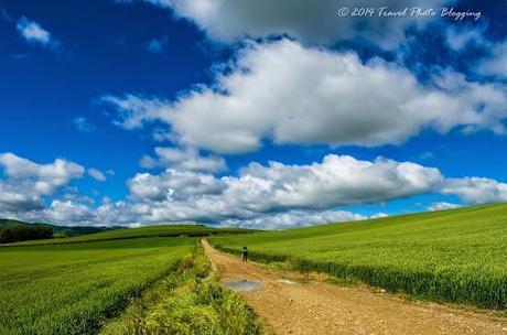 Wheat fields of Castilla y León
