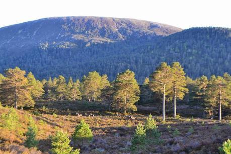 Road Trip in the Highlands Part One: Wildlife spotting in Rothiemurchus