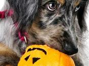 Safety Tips: Keep Pets Safe from Halloween Hazards