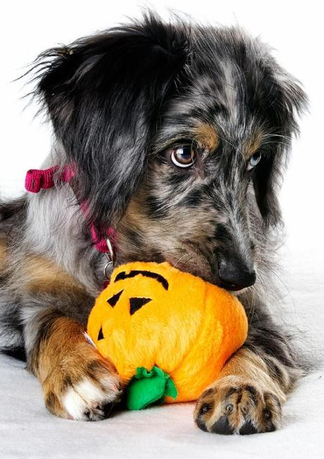 Safety tips: How to keep pets safe from Halloween hazards