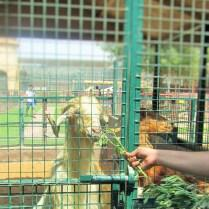 Visit to Emirates Park Zoo, Abu Dhabi