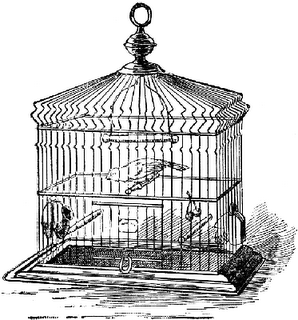 Droppings from the Catholic Birdcage — Cardinal Burke: Gays Should