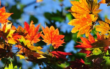 'Autumn Leaves' — A Song for All Seasons