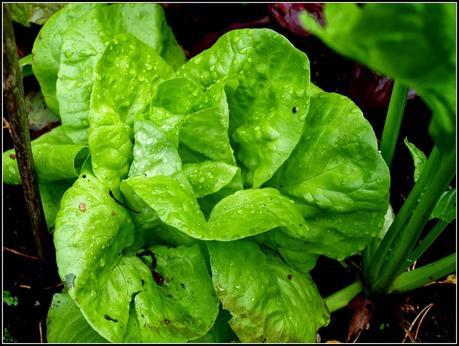 October salad update