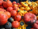 Favourite Five Pumpkin & Squash Recipes