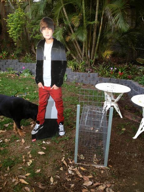 We put up a bird-feeder.I've been enjoying all the birds ...