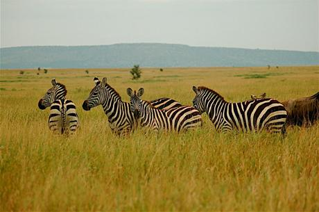 Fears of Ebola Crushing Africa's Safari Tourism Industry