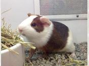 Meet Louis Care Your Guinea
