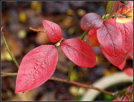 More shades of Autumn