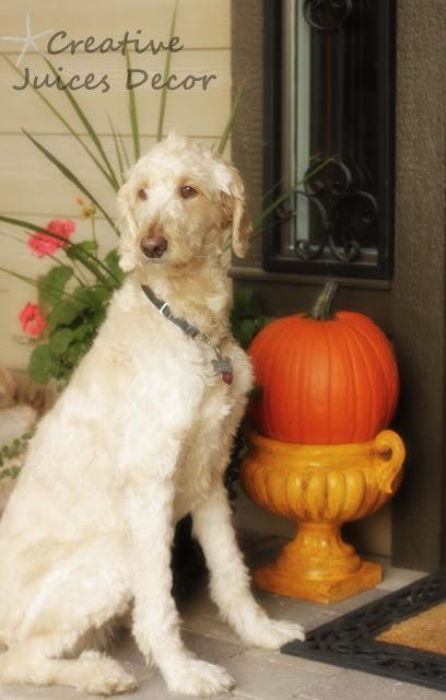 Simple and Easy Ideas on How to Decorate Your Pumpkins