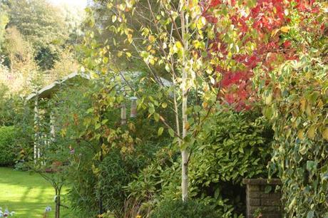 Foliage in my garden