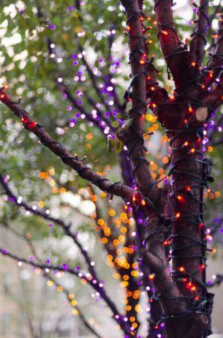 Thrifty fairy lights for Christmas AND Halloween!