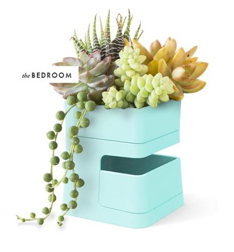 Planter made with removable basin. Perfect for draining.