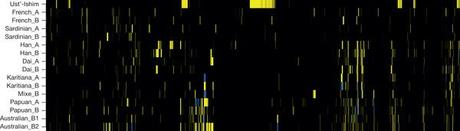 The genomes of several people laid out next to each other. Yellow bits represent Neanderthal DNA. The Siberian femur is the top one.