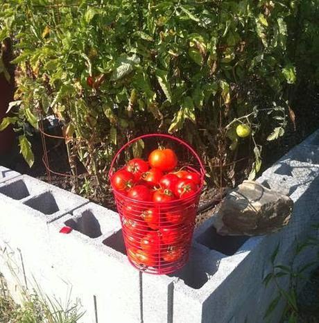 Episode 149, Raised Bed Gardening at Liberty Ridge