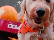Halloween Treats: Best Pumpkin Treat Recipes