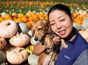 Life Saving Tips Keep Your Pets Safe This Halloween