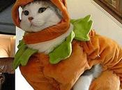 Funniest Cats Dressed Pumpkins