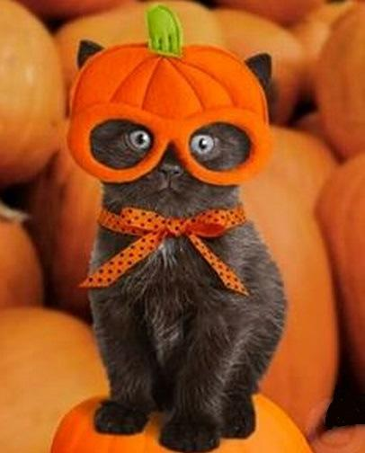 top-10-funniest-cats-dressed-as-pumpkins