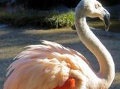 FLAMINGOS, GIRAFFES, CONDORS MORE: Santa Barbara Zoo, Barbara,