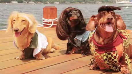 Three Dachshunds dressed up on a dock