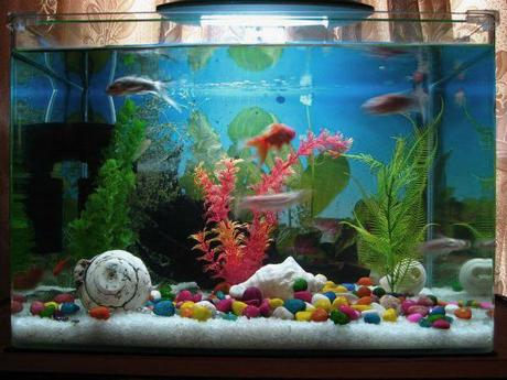 Fish tank decoration ideas for kids for Toddler fish tank