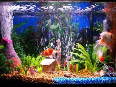 Fish Tank Decoration Ideas For Kids Paperblog