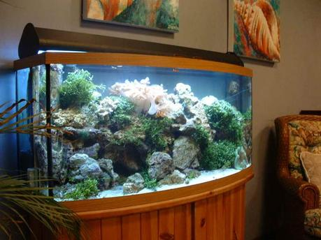 Fish tank decoration ideas for kids paperblog - Decorative fish tanks for living rooms ...