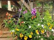 Hanging Basket Design Challenge